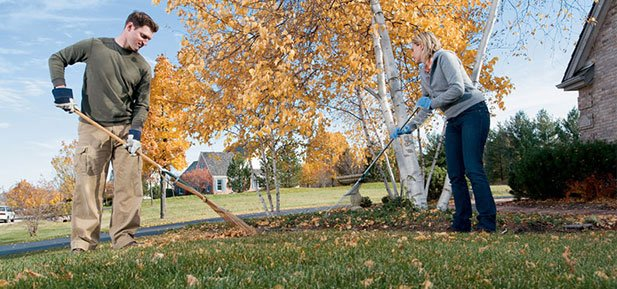 maintenance-of-your-lawn